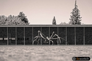 Crouching Spider 6695 de Louise Bourgeois 7