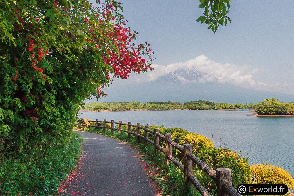 Fuji San du lac Tanuki