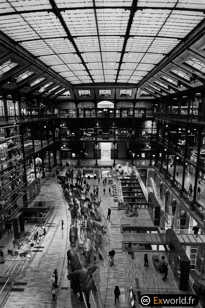 Grande Galerie de l'Evolution II