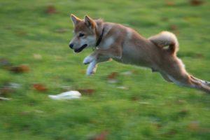 Le saut de Kuri