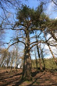 l'arbre à plusieurs bras