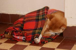 Le sommeil de Kuri