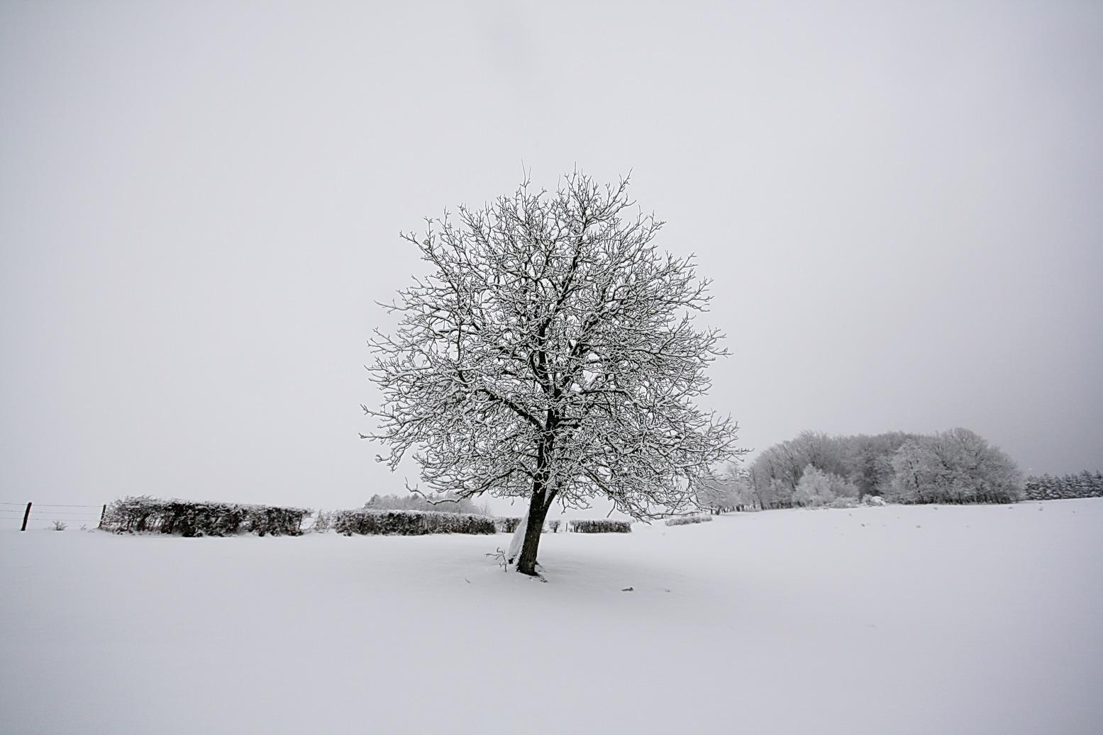 nature scenery  paysage de neige en noir et blanc