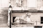 Le lion du 7