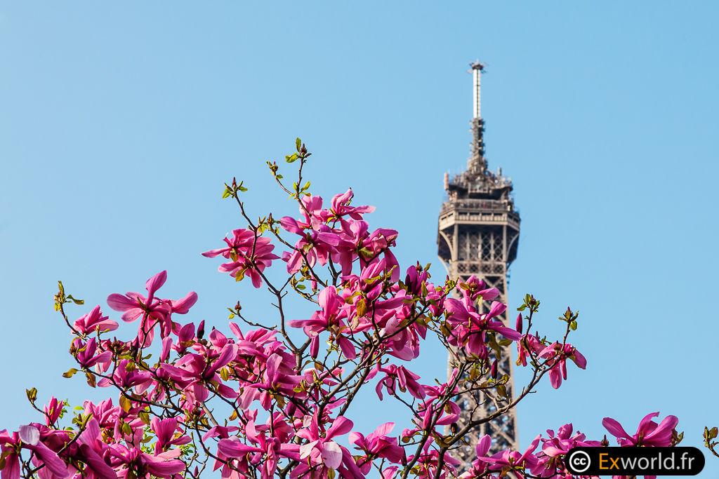 Eiffel Flower