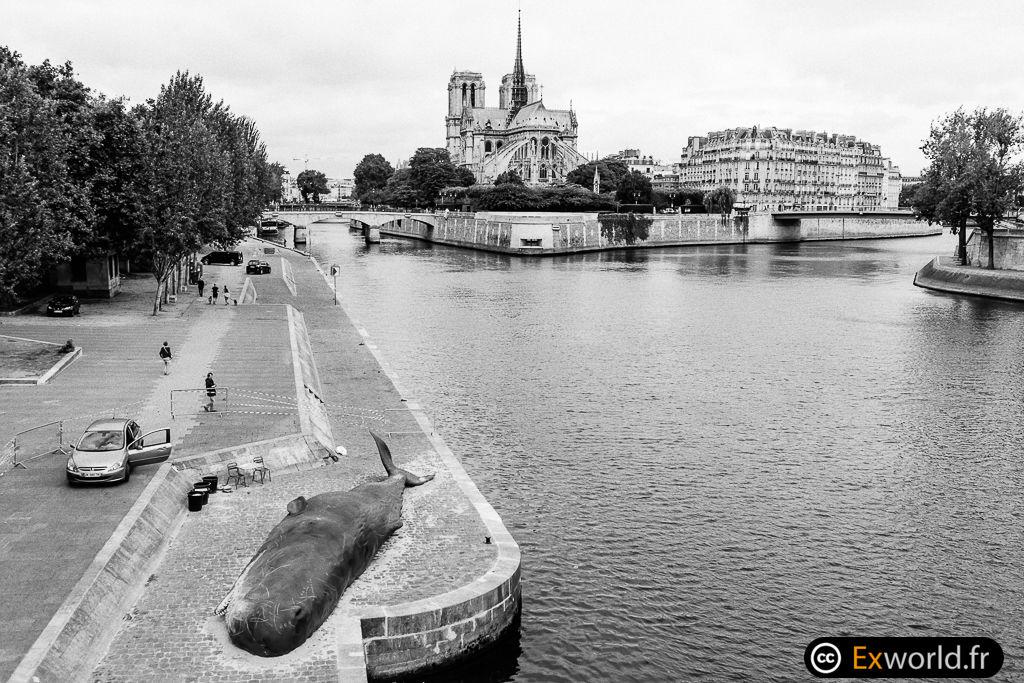 Whale in front Notre Dame de Paris