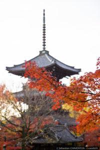 Shinnyodô
