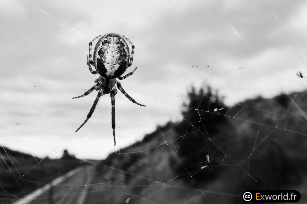 Spider sky