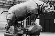 Le Rhino de Jacquemart