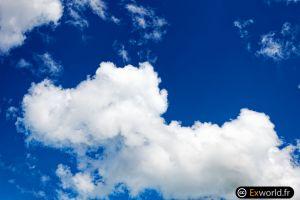 Dog\'s cloud