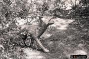 Foxes de Michael Stipe 1